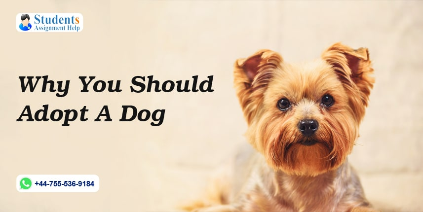 Why You Should Adopt A Dog